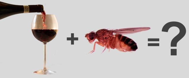 Fruit-Fly-Trap2.jpg